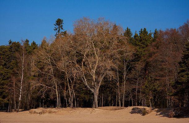 Богатая история заповедных лесов